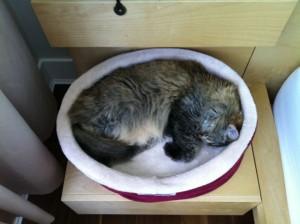 bibi_sleeping